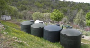 Ingrid's tanks