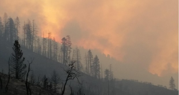 Rough fire chars forests - photo SNF