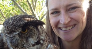 Great Horned Owl at YAAS presentation by Pamela Flick