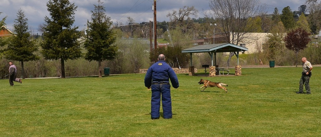 K9 Arthur chasing suspect - photo by Gina Clugston