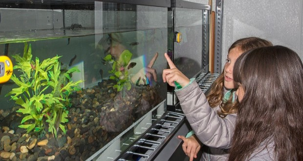 Young participants admire California red-legged frog tadpoles at the San Francisco Zoo  - photo courtesy San Francisco Zoo and Marianne Hale