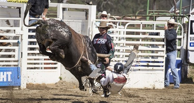 Rodeo by Carrie Jenkins - IMG_4575
