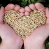 Virginia Eaton blog May 28 heart hand grain