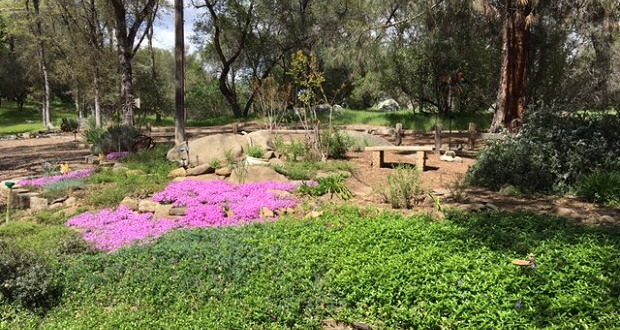 Low Water Garden Design that are not only hardy to chicagos climate but are carefully considered for your garden so that you can enjoy your home landscape for years to come Low Water Garden Design Workshop In Mariposa Sierra News Online