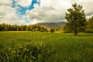 ackerson-meadow_afternoon-light-large