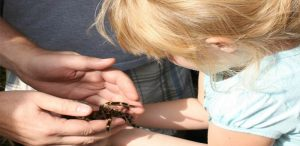 yosemite-madera-visitors-center-1601_tarantulachild