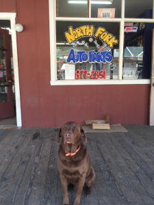 north-fork-auto-parts-exterior-with-dog-2016-lisa-clark