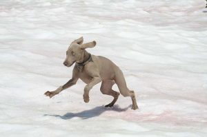 sally-jumping-in-snow Photo by Keith Sauer
