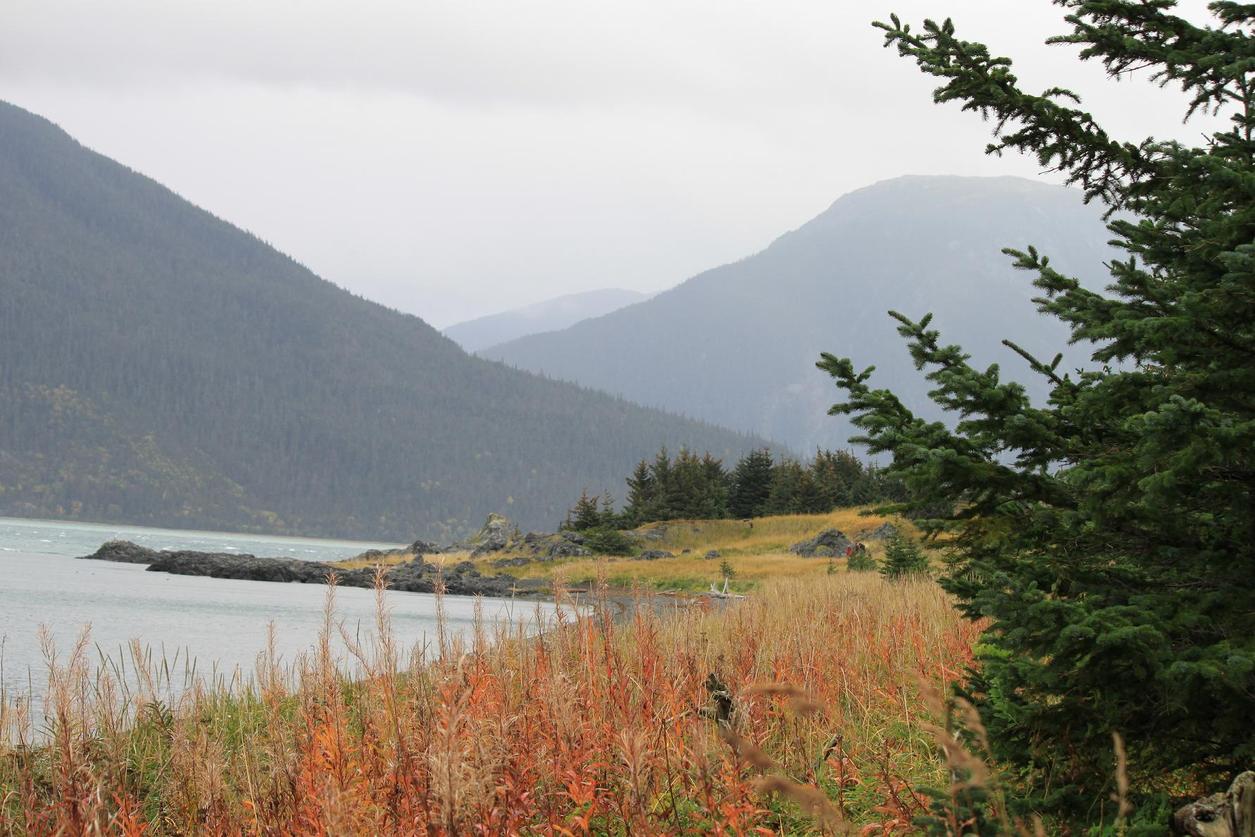 Alaska haines county - Grizzly Camping In Southeast Alaska