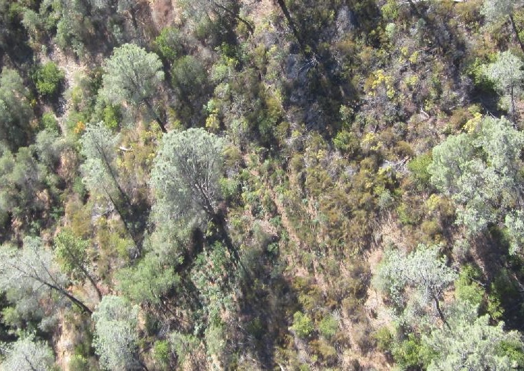 Wilderness pot grow aerial near Bagby