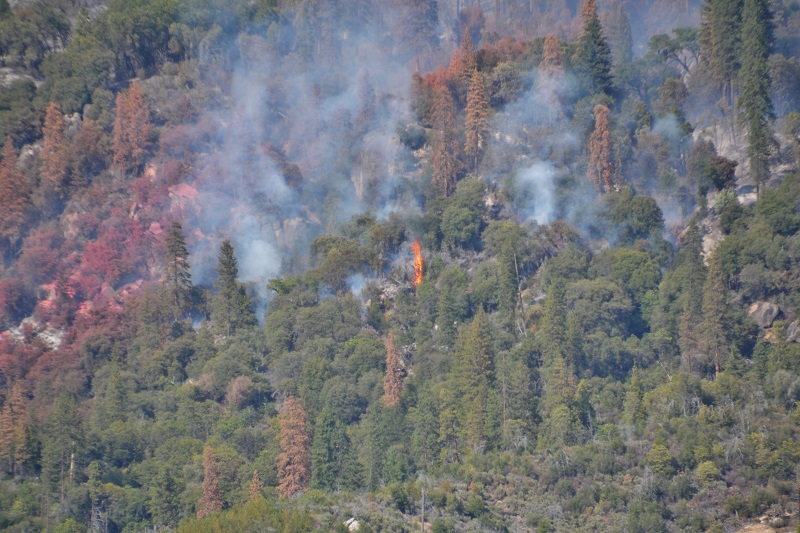 Tree torching to the south of retardant line