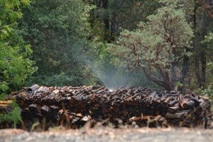 Watering down the woodpile ahead of the Willow Fire