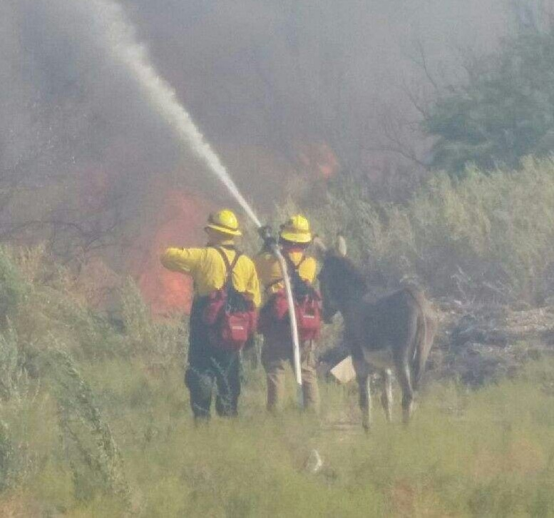 Donkey at Willow Fire in Mohave Valley - photo by Bill Weber