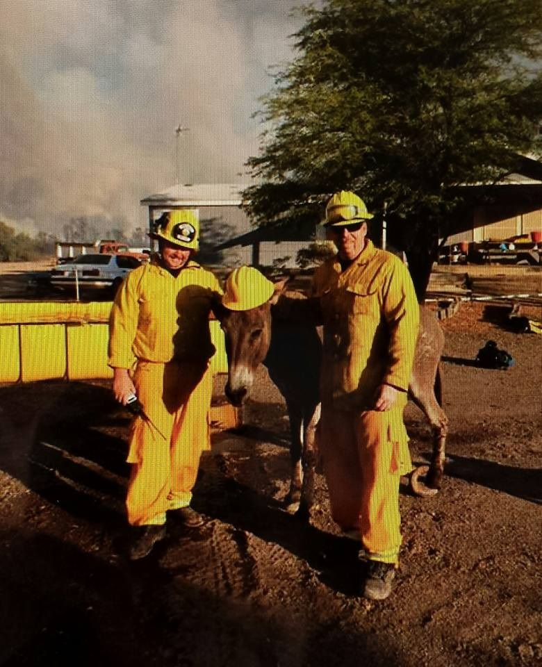 Donkey gets hardhat at Willow Fire in Mohave Valley - photo by Bill Weber