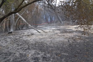 Burnt out vegetation at end of Snyder Road on Sundance Fire - photo by Gina Clugston