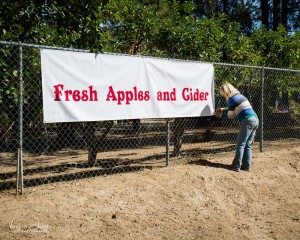 Fresh Apples And Cider - photo by Virginia Lazar