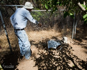 John points out the plug in the fence where the bear came in - photo by Virginia Lazar