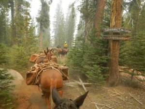 Mule pack strings on Rough Fire - photo SNF