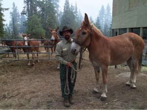Mules working Rough Fire - photo SNF
