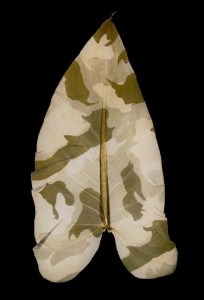 Binh Danh's Military Foliage, Chlorophyll Print and Resin