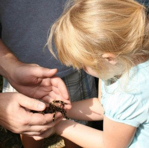 Little Girls Holds Tarantula