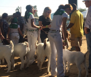 Minarets FFA Madera Fair 2015 1 photo submitted by Victoria Whitely