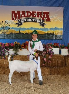 Sept 2015 Ellie Morris Madera Fair Coarsegold 4H - photo by Carrie Jenkins