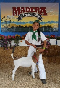 Sept 2015 Emma Hussey Madera Fair Coarsegold 4H Goat - photo by Carrie Jenkins