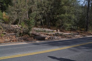 Downed trees on Road 274 hazard project