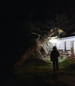 Bull Pine falls on house - photo by Scott Gordineer