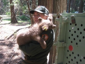 NWF book When Mountain Lions Are Neighbors nps bear cub