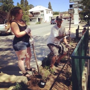 Slims adam and daisy landscaping