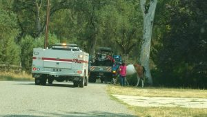 Mattie Fhy residents load horses to evacuate