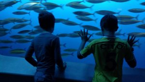 dream-vacations-kids-at-aquarium-courtesy-dee-gardetti