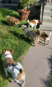 National Dog Day 2016 Karen Elliott dogs Sweet Pean, Holly, Mimi and Tawney with Biscuit