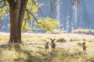 Yosemite in Fall - Kim Lawson - Visit Yosemite Madera County