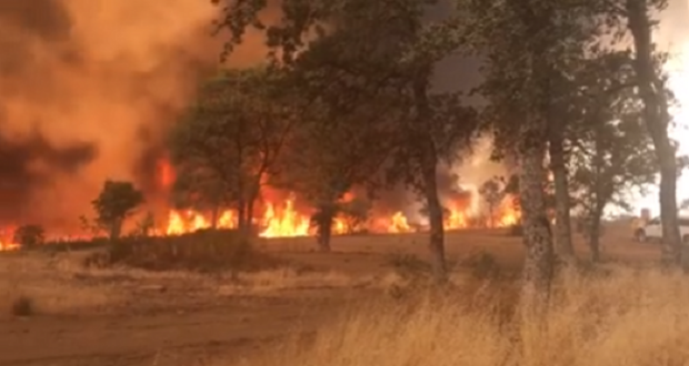 cal fire reports 29 structures destroyed in detwiler fire