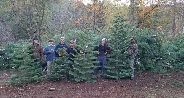 north fork boy scout christmas tree lot sells out - Boy Scout Christmas Trees