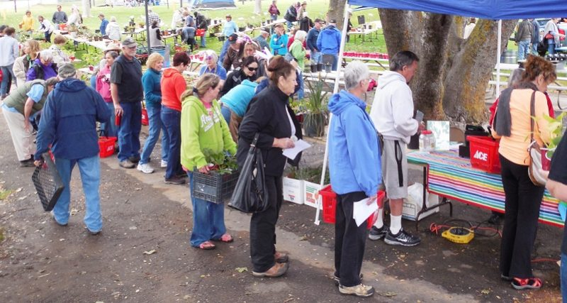 A Bounty Of Choices At Master Gardeners Spring Plant Sale