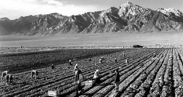 Image of field workers by Ansel Adams