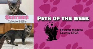 Pets of the week. Celeste and Ella.