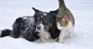 Picture of a dog and a cat in the snow