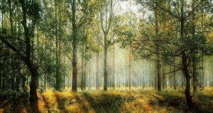 Picture of a forest.