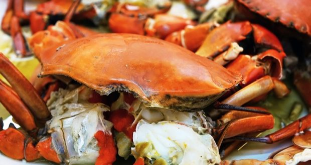 Picture of a steamed crab.