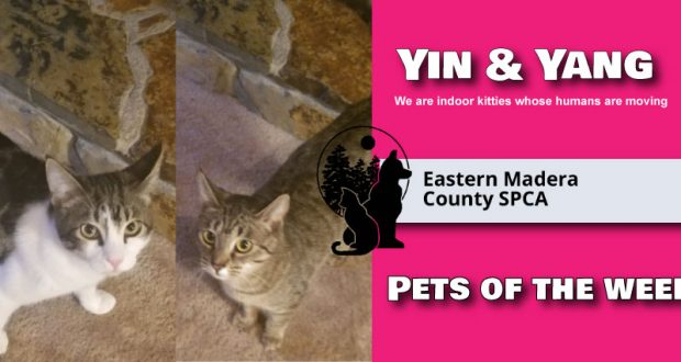Picture of pets of the week, Yin and Yang.