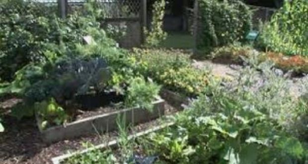 Picture of a vegetable garden.