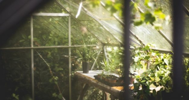 Picture of plants in a greenhouse.