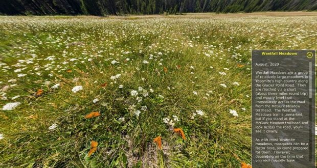Image of a flower meadow created using virtual reality.
