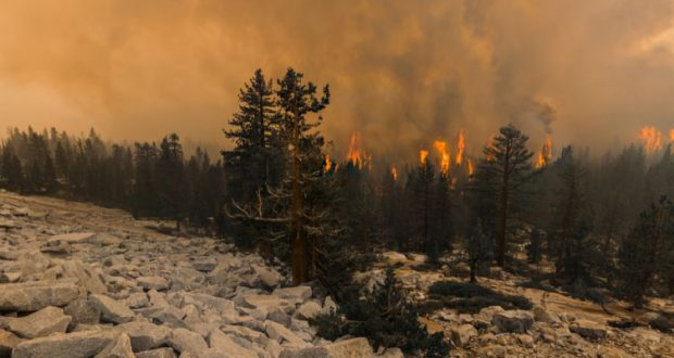 Image of the Blue Jay Fire off of Tioga Road.