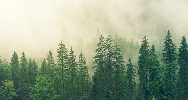 Image of a smoke-filled forest.